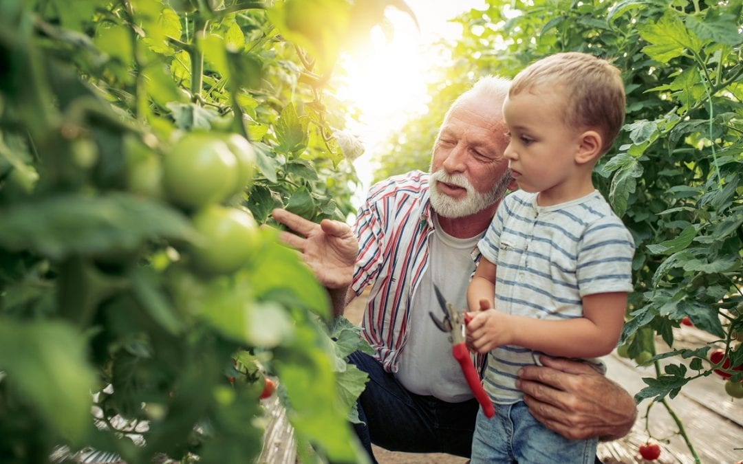 Caring for a grandchild? You could be eligible for a pension top up